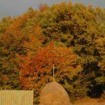 Karpaten - Rumänien - Bunter Mischwald im Herbst mit aufgeschichteten Heuhaufen im Vordergrund