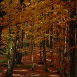 Karpaten - Rumänien - Bunter Mischwald im Herbst