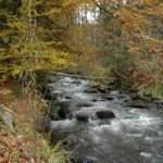 Karpaten - Rumänien - Wildbach im Wald