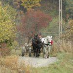 Karpaten - Rumänien - Pferdefuhrwerk mit zwei Pferden