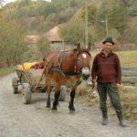 Karpaten - Rumänien - Bauer mit Pferdefuhrwerk post für Portrait