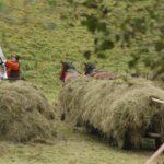 Karpaten - Rumänien - Pferdefuhrwerk mit Heu beladen