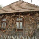 Karpaten - Rumänien - Weinranken am Holz