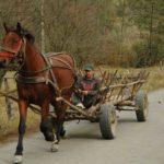 Karpaten - Rumänien - Pferdefuhrwerk fahrend