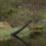 Norwegen -Baum am Ufer spiegelt sich im Wasser