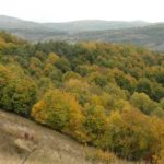 Karpaten - Rumänien - Blick über herbstbunte Wälder