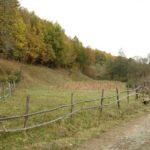 Karpaten - Rumänien - Kleine Viehweide