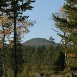 Norwegen -Blick aus einem Wald auf einen Berg