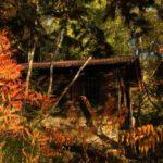 Vereinsaktivitaeten - Kote vor dem Vereinshaus im Herbst