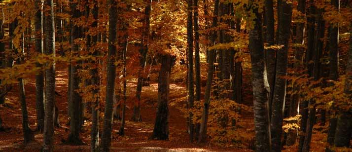 Schwierigkeiten schamanische Reise - Herbstwald