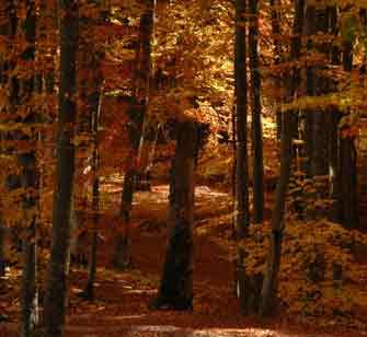 Schwierigkeiten schamanische Reise - Bunter Wald
