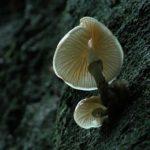 Galerie Deutschland - weißer Pilz am Baum, von unten