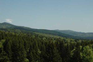 Naturgeister-intensiv-2017_ Blick über bewaldete Hügel bis zum Horizont