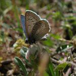 Galerie Deutschland - Schmetterling auf Kleeblüte