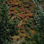 Sardinien - Bunte Sträucher im Frühling