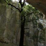 Sardinien - Steineiche in einer Felsschlucht