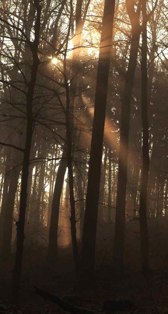 Schamanismus.org, das Unsiverum des Schamanen - Sonnenstrahlen brechen durch die Wipfel des Waldes