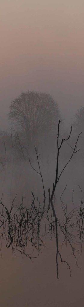 Seminare an schönen Orten - Nebelsee mit Ästen im Wasser