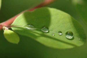 Achtsamkeit, eine Spurensuche - Wassertropfen auf einem Blatt