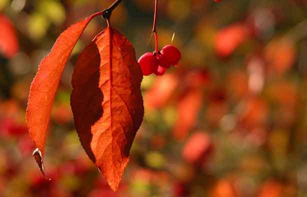 Pfaffenhuetchen-Herbst oder was wir wissen