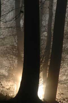 Tod - Licht zwischen Bäumen