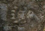 Naturgeister intensiv - Bärenspur im Matsch