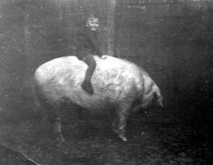 Sinnkrise - Juge sitzt auf großem Hausschwein