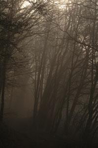 Schamanismus und Natur - Waldweg im Nebel